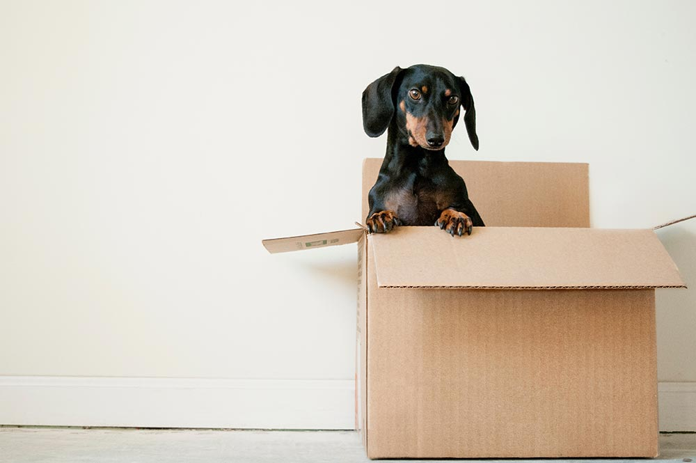 Top tips for a stress-free move